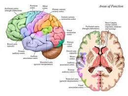 Get The Information You Need About Brain Injuries In Our