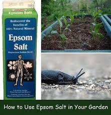 epsom salt gardening. Brilliant Gardening HowtoUseEpsomSaltinYourGarden To Epsom Salt Gardening