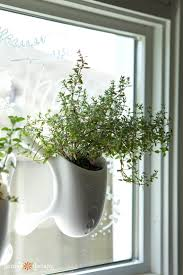 i ve written about which herbs to grow indoors and how to grow them indoors in previous articles and today i want to share the growing schedule i use for