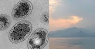 Bacterias primitivas favorecieron las condiciones para la vida en la Tierra