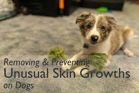 How to Remove and Prevent Skin Tags on Dogs | PetHelpful