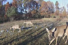 Dnr Setting New Regulations To Help Combat Cwd In Deer 9