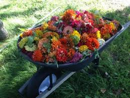 A Compost Pile With Diverse Ingredients Will Give Your Plants A More Complete Nutritional Package Materials High In Nitrogen U2014 Such As Spent Flowers