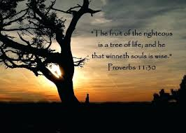 Tree Of Life Quote Fascinating Tree Of Life Quotes Formidable Tree Of Life Quote Simple The Best