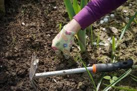 12 best weeders for gardeners