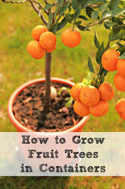 Espalier Gardening How To Grow Fruit Trees In A Small Space When Do You Plant Fruit Trees