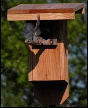 Tpwd Nestboxes And Birdhouses For Common Birds