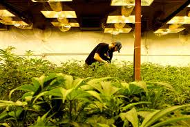 Image result for https://usaweed.org/420-friendly-listing-category/420-tours/