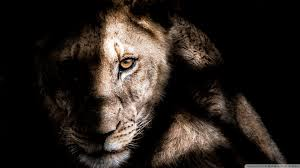 african animals wallpaper high resolution. Delighful Resolution HD 169 In African Animals Wallpaper High Resolution