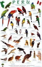 Peru Forest Bird Guide Amazon Co Uk Robert Dean Mark