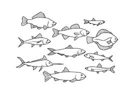 魚イラスト 写真ダウンロード オシャレイラスト かわいいダウンロード