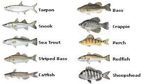 Texas Fish Chart 36 Prototypical Florida Saltwater Fish Identification Chart Pdf