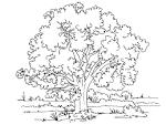 Картинки деревьев раскраски