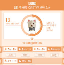 Dog Sleep Pattern Impressive Infographic The Sleeping Cycle And Habits Of Cats Dogs Other Pets