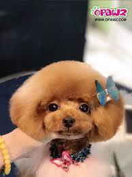 Designer Pet Jewelry Opawz Pet Fashion Provides The Hottest Dog Accessories