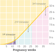 Pregnancy Weight Gain Week By Week Chart Pregnancy Day By Day Welcome To Your First Trimester Part 20