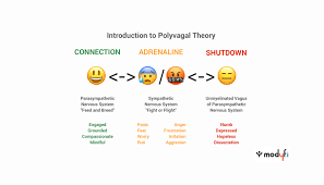 Polyvagal Theory Chart Calming The Nervous System Part 1 Introduction To