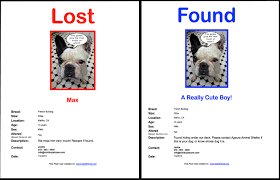 10 Things To Do To Find Your Lost Pet Malibu Pet Care