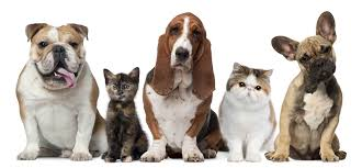 dogs and cats wallpaper. Wonderful Wallpaper Cat U0026 Dog Wallpaper And Dogs Cats