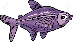 Small Picture Cartoon Illustration Of X ray Fish Royalty Free Cliparts Vectors