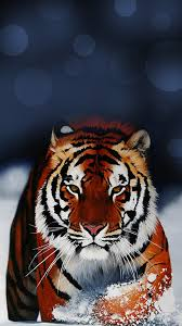 tiger iphone wallpaper. Unique Iphone Tiger Wallpaper IPhone 6 Plus With Iphone