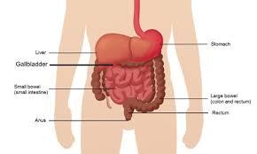 Gallstones Causes Symptoms Treatment Southern Cross Nz