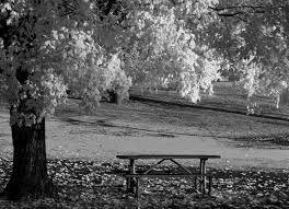 picnic office design. Chris Oakley Landscape Design Www Tapdance Org Black And White Photography Blog Tags Autumn Fall Leaves Picnic Office I