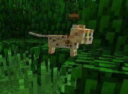 tame baby ocelot minecraft. Delighful Tame A Baby Ocelot At Jungle 3 On Tame Baby Ocelot Minecraft