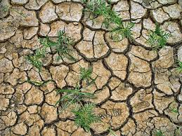 Image result for The parched plains