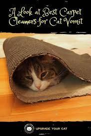 best carpet cleaner for cat vomit 5