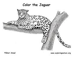 Small Picture Jaguar Coloring Page