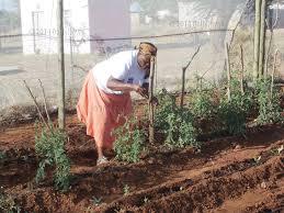 backyard gardening. Ngaka Sings Praises Of Backyard Gardening A