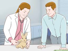 How To Shadow A Veterinarian With Pictures Wikihow