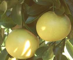Florida Native Plants Florida Plants Database Landscaping And Fruit Trees For North Florida