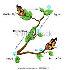 Image result for metamorphosis images