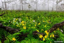 yellow rainy flowers in the field of