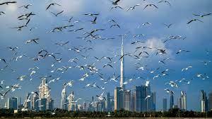 تراجع الحركة في مطار دبي مقارنة بالنصف الأول من 2020 - فرانس 24