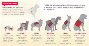 34 Credible Miniature Australian Shepherd Size Chart