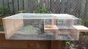 Bird Cage Trap Design Bird In Everything Bird Trap Plans