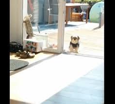 dog1 dog2