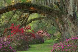 magnolia gardens magnolia gardens