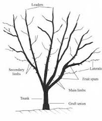 Fruitwise Guide To Pruning Apple Treespart 1  YouTubePruning Fruit Trees Video