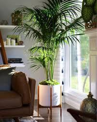 Perfetta come pianta da appartamento, perché è molto resistente a varie. Piante Da Appartamento Le Mie 7 Preferite Debora Cosmai