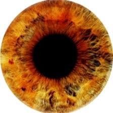 Eye Colors Tumblr