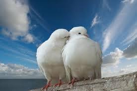 Slikovni rezultat za golubice na grani