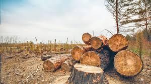 Illegal Logging Theindependentbd Com