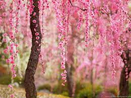 Flower Tree Wallpapers - Wallpaper Cave
