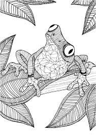 Frog Adult Colouring Page Colouring In