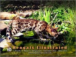 Calendar 2013 Through 2015 Bengals Illustrated 2014 Bengal Cat Calendar Through April