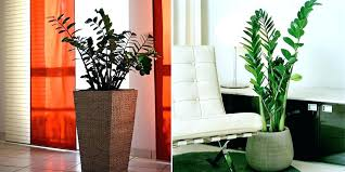 lighting for houseplants. Low Light House Trees Extraordinary Tall Plants  Inspiration Of Indoor Tree Lighting Ideas Lighting For Houseplants